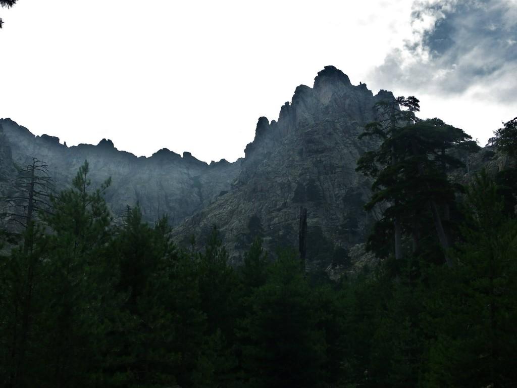 Route Corsica pineta nebbia