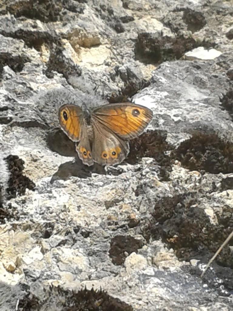 Farfalla al Parco - Ilaria Macedonio