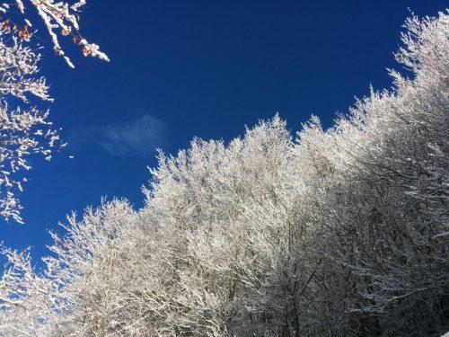 Val Borbera, alberi infranti e alberi bianchi #7