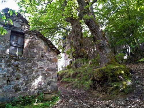 Val Borbera, vecchie vie di boschi in alta valle